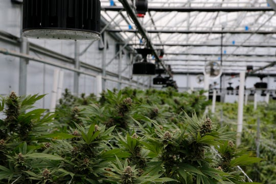 Sparx Cannabis grows marijuana in the Salinas area. The company is expanding beyond wholesale to reach consumers directly.