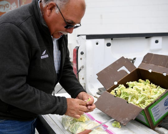 Rick Harris, the Director of Growing Operations at Mann Packing, holds a caulilini floret. June 14, 2019.