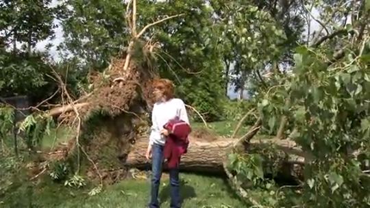 Strong winds downed several trees Thursday night in the Pine Valley Farms neighborhood west of Port Penn.