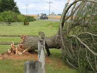 More downed trees Thursday as windier-than-usual year keeps blowing