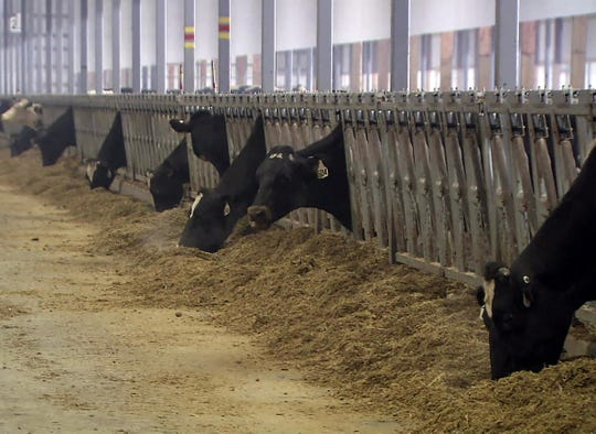 About 90% of CAFOs in Wisconsin are dairy operations. The large farms are required to manage feed and waste in a way that avoids contaminating groundwater or nearby streams and lakes.