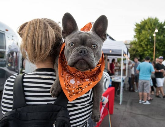 Music, food and vendors offering canine toys and treats will be part of Bark on Biddle.