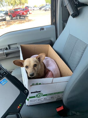MCSO Lake Patrol deputies rescued a small dog found with broken legs and a broken spine Saturday near the Salt River.