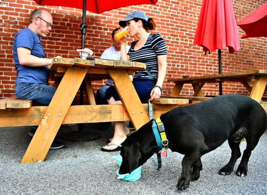 Spenser, 4, a basset-lab mix, enjoys a snack while at back, from left, Mike Strong, of Phoenix, Az., Bob Reilly and his wife Cassandra Storm, both of Hellam Township, talk while partaking in the York City 6 Volume 2, a mango session IPA, at Collusion Tap Works in York City, Saturday, June 15, 2019. The six York City breweries--Mudhook Brewery, Liquid Hero Brewery, Crystal Ball Brewing Company, Collusion Tap Works, Gift Horse Brewing Company and Old Forge Brewing Company--will donate one dollar from each pint sold at each of the breweries to York County Veterans Outreach. Dawn J. Sagert photo