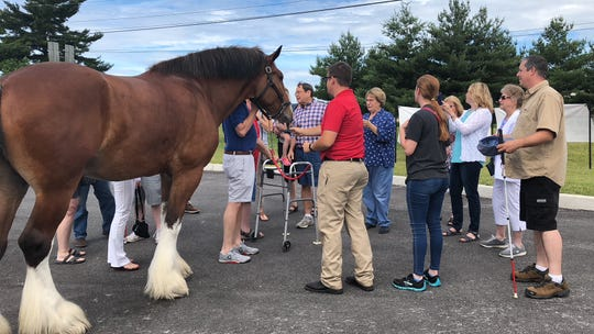 Employees from VisionCorps, serving several counties including York, meet with the Budweiser Clydesdales in a special visit arranged by Brewery Products, in Springettsbury Township on Saturday, June 15. (Photo: Lindsay C. VanAsdalan)