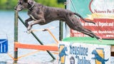 On June 15, 2019, Dogs and their trainers came to Codorus State Park to compete in the Keystone Dock Dogs Competition at the Codorus Blast Festival.