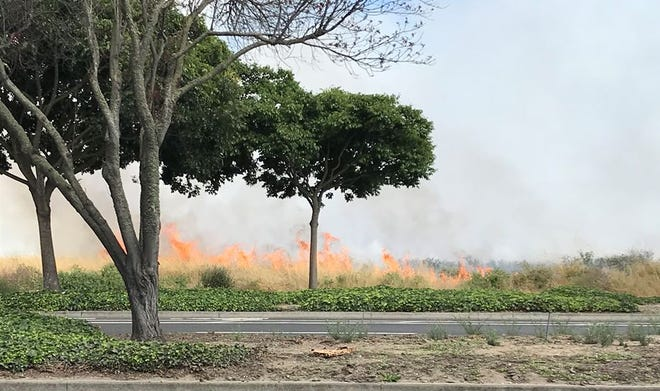 A vegetation fire has broken out in Salinas. June 15, 2019.