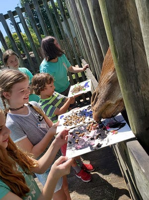 The giraffes create art at the Montgomery Zoo.