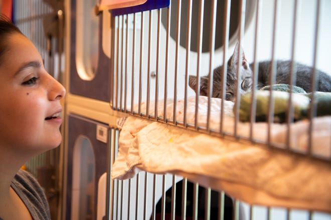 Chloe OBrien, 12, looks at the cat she is adopted at Metro Animal Care and Control on June 16.
