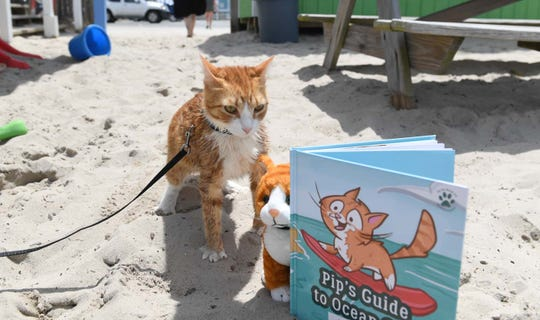 Pip the Beach Cat shows off his first book and special pip plush in Ocean City, Md. on Wednesday, June 12, 2019.