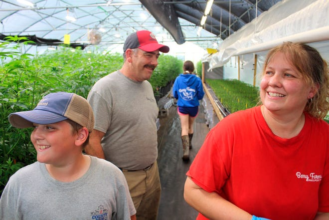 In this May 29, 2019 photo, the Berry family, youngest son Jonathan, 10, father Cutis and mother Ellen, develop their hemp plants in their recently converted greenhouse at Berry Farms in Philpot, Ky. Like many small farmers, the Berry's are trying their hand at hemp as a potential supplement to their existing operations of corn, beans, cattle, hay and tobacco.