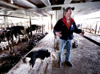 Wisconsin dairy farmer facing unstable market sells herd
