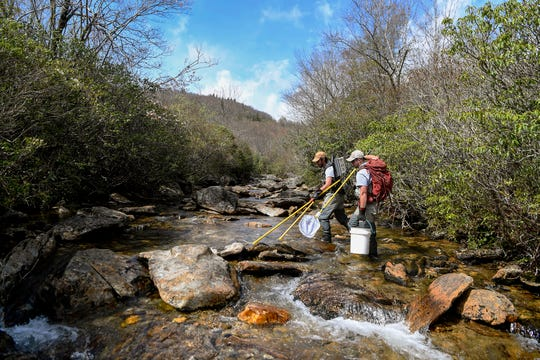 Conservation technicians Kenneth Lingerfelt, left, and Justin Nichols sweep Yellowstone Prong looking for brook trout to catch, measure and release in the Pisgah National Forest May 1, 2019.