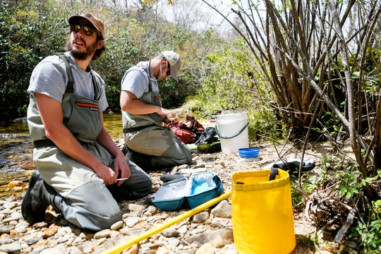 Conservation technicians Kenneth Lingerfelt, left, and Justin Nichols gather measurements and DNA from brook trout caught on the Yellowstone Prong in the Pisgah National Forest May 1, 2019.