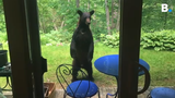 A black bear was caught peering into a home in a condo complex off Kennedy Drive in South Burlington on Monday, June 17, 2019.