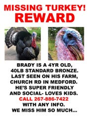 Brady, a pet turkey in Medford, has gone missing. He's a family member, his owner said.