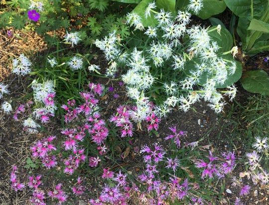 The Hoosier Gardener: Magazine scouts Indianapolis-area gardens
