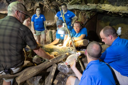 Komodo dragon Khaleesi is cared for on Friday by her zoo caregivers as they try to help her recover from a CT scan. The dragon was found dead Monday from an undetected infection.