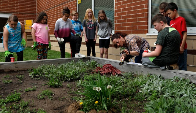 Gorsuch West Elementary teacher Patty Pillar shows students in her Gorsuch Gardeners Genius Hour Club how to transplant individual lamb's ear plants to take home. Members of the club meet after school to the help take care of the school's raised garden beds.