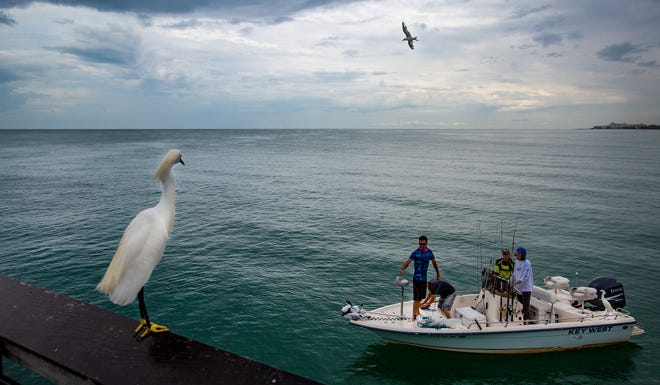 Two snow egrets and a tern keep their eyes on charter fishing boat on a rainy June day as its crew prepares to cast a net for bait near the Naples Pier on a cloudy in Naples. Forecasts predict an 80 percent chance of precipitation on Tuesday.