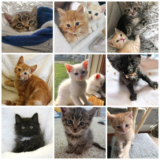 It's Kitten Season at the Licking County Humane Society. Several adorable little kitties are waiting for their forever homes.