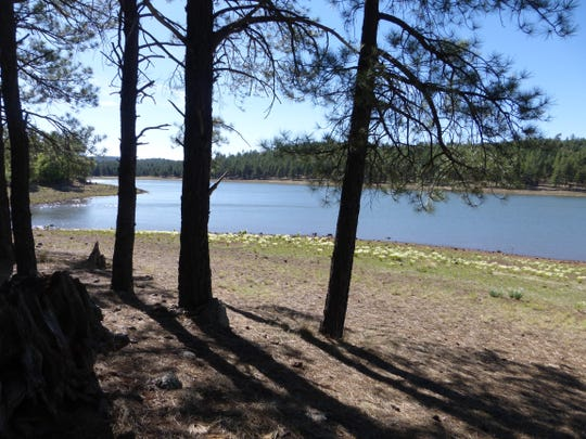 The campground at Dogtown Lake offers seclusion in the pine forest near Williams.