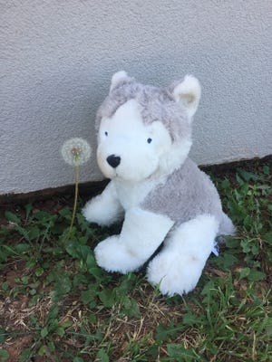 a stuffed puppy was found at County Road 176 and U.S. Highway 83 south of Abilene on Sunday.