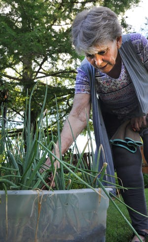 Master Gardener, Joann Plaxco uses plastic containers to plant various vegetables and flowers in her garden, Monday morning.