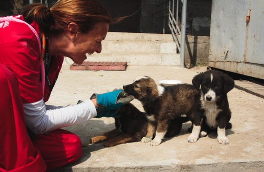 Clean Futures Fund volunteer Michelle Clancy playing with litter of Chernobyl puppies.