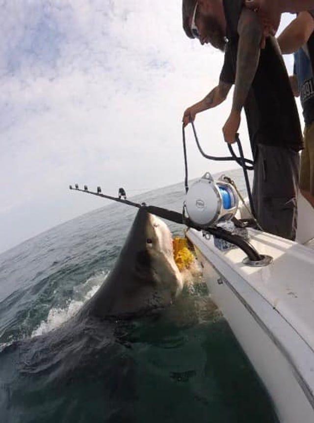 Huge great white shark surprises stunned NJ fishermen