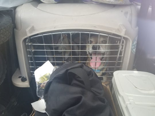 Two dogs were left in crates in a South Texas town while their owner was shopping. In 10 minutes, a vehicle that's turned off can reach temperatures of about 110 degrees on a 90-degree day.