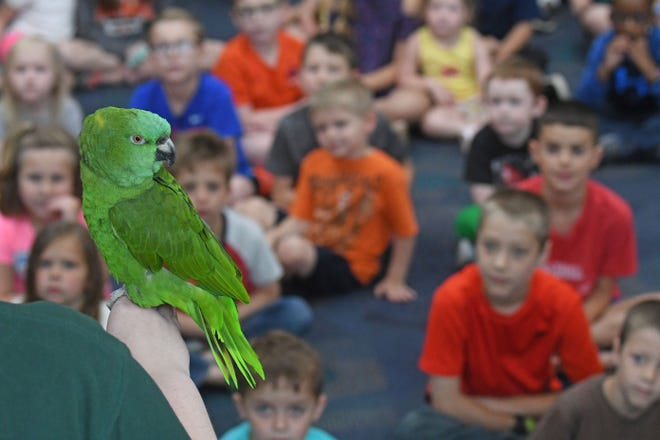Children got a close-up look at Chichi the Amazon Parrot on Tuesday during a presentation by the Akron Zoo at the Mansfield/Richland County Library.