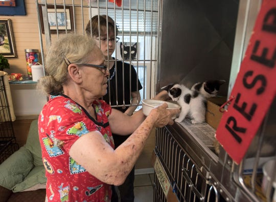 Hotel for Dogs and Cats employee Patty Cohagen trains a volunteer June 17 on how to care for a litter of kittens at the shelter.