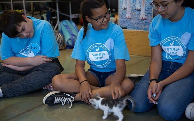Jake Morse Ellington, 12; Nadia James, 11 (center); and Victoria Veloz, 12; play with a foster kitten at the Arizona Humane Society.
