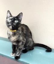 Duckie is available for adoption at 10807 N. 96th Ave. in Peoria. For more information, call 623-773-2246.
