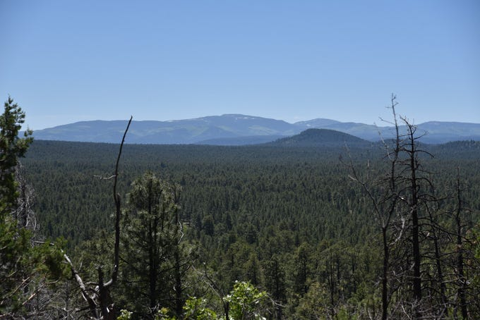 Hikers can see 11,403-foot Mount Baldy from the Vista Point Trail off the Country Club Trail.
