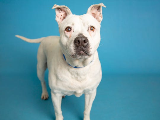 Mamas is available for adoption on June 23, 2019, at noon at 1521 W. Dobbins Road in Phoenix. For more information, call 602-997-7585 and ask for animal number 598440.