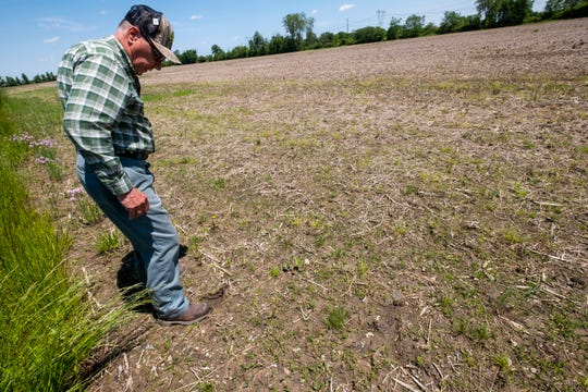 Jim Domagalski inspects an unplanted soybean field on his Columbus farm Tuesday, June 11, 2019. Due to wet conditions, Domagalski has been delayed in planting his crops and now says it may be too late in the year.