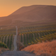 The best California wine region you've never heard of
