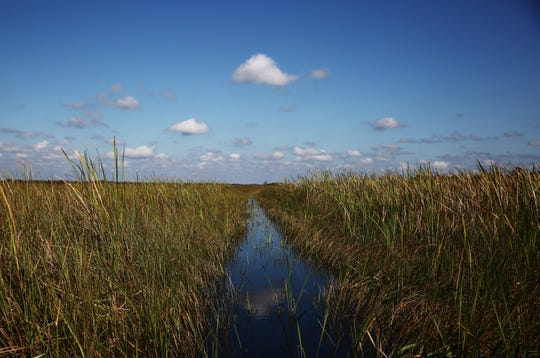The view from an airboat on Sunday, Nov. 1, 2015, in Everglades National Park. The park is a popular destination for Collier County airboaters to fish, swim, and race airboats.