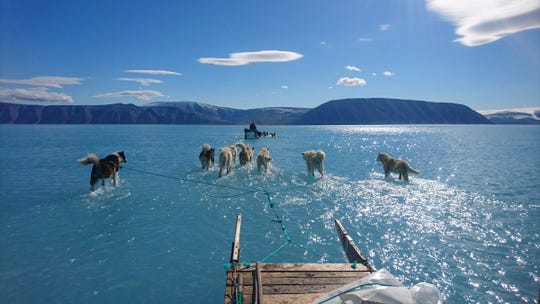 In this photo taken on June 13, 2019, sled dogs in Greenland run on ice, which is covered by a thin layer of water.