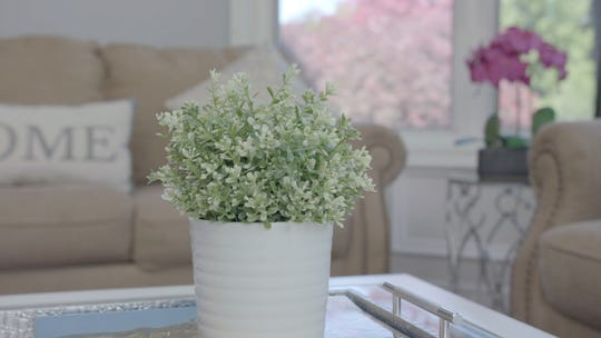 Certain plants can be toxic for babies. Page keeps fake plants inside her home.