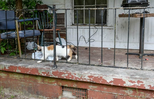 A cat walks across the porch of the residence on Kay Street, where Richard Smith, 49, of Honea Path lived, a few blocks away from the site of the accident.