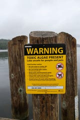 "Signs are displayed at Kitsap Lake to alert people of the dangers of swimming in the lake, which currently has dangerous levels of blue-green algae or ""cyanobacteria."""
