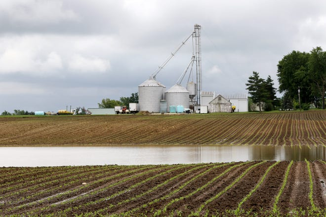 This property in Darke County pictured on Monday, June 17, 2019, has been a part of Scott Labig's family for three generations. The season's rainy conditions are probably the worst Labig's seen since his first season farming in 1981.   At this time last year, Labig's corn had already grown to his knee.