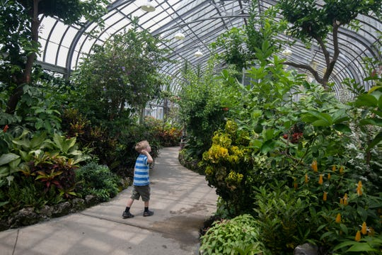 Just a few steps behind his father, Benjamin Stevens, 5, of Farmington Hills soaks in the plant life in the Tropical Exhibits room in the Anna Scripps Whitcomb Conservatory on Belle Isle on Wednesday, June 19, 2019.