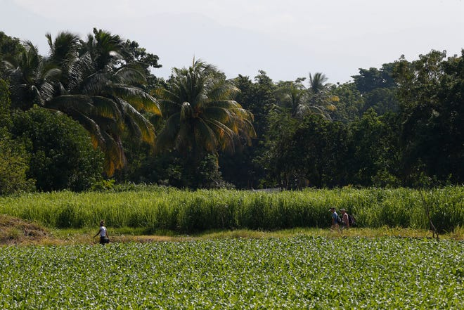 Migrants walk through a field to avoid a migration checkpoint along the highway in El Manguito, south of Tapachula, Mexico.