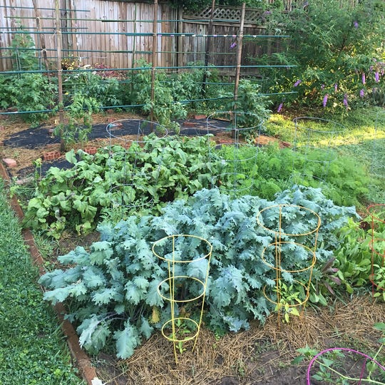 Kale and beets are a healthy addition to any garden - or diet.
