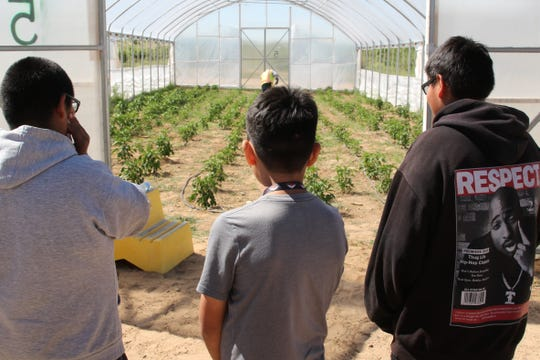 Students at the Central Consolidated School District Indigenous STEM Camp watch growing facility workers harvest green chili peppers while touring the Navajo Agricultural Products Industry just outside Farmington on Wednesday.