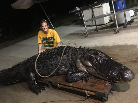 The 12-foot, 463-pound alligator was found on Interstate 10 in Tallahassee, Florida, on June 3, 2019.